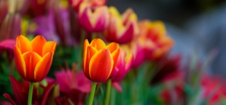 troede-ikke-det-var-muligt-blomster-2-mybodyandmind-x151