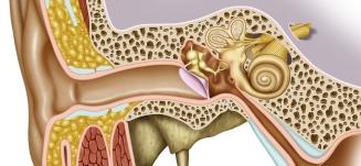 Øret tinnitus mellemørebetændelse indre øre - Mybodyandmind x151