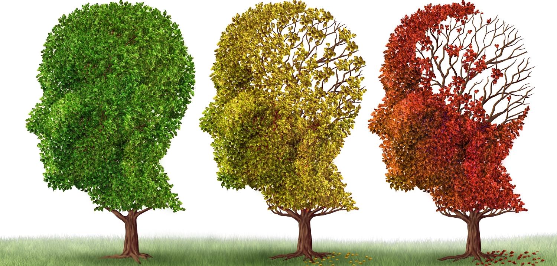 3 træer - får hjernen ilt nok - Mybodyandmind 1500x