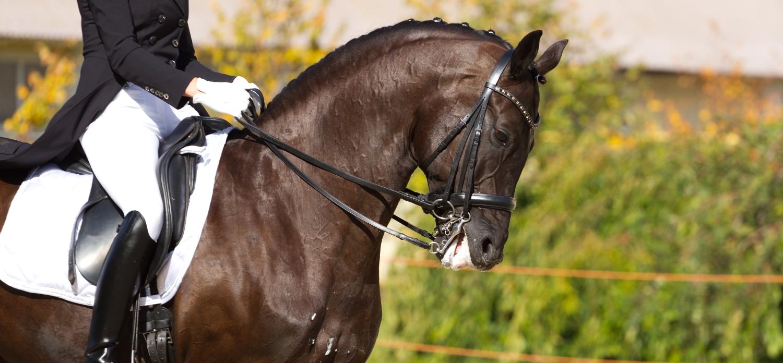 Hvorfor kamp - Ridning - dressur - hest - Mybodyandmind 1500x
