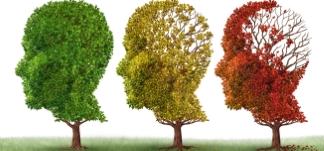 3 træer - får hjernen ilt nok - Mybodyandmind 327x