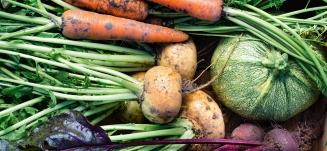 Kan man spise sig rask - rodfrugter fra haven - Mybodyandmind x151