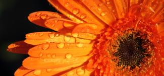 Blomst - Om Mybodyandmind x151